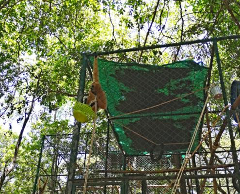 Bis sie wieder freigelassen werden können leben die Affen in großzügigen Käfigen mit viel Spielzeug