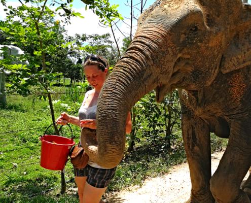 Spaziergang mit der Elefantendame