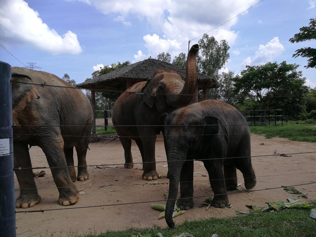 Im Thai Elephant Refuge Tiere ohne Qualen erleben