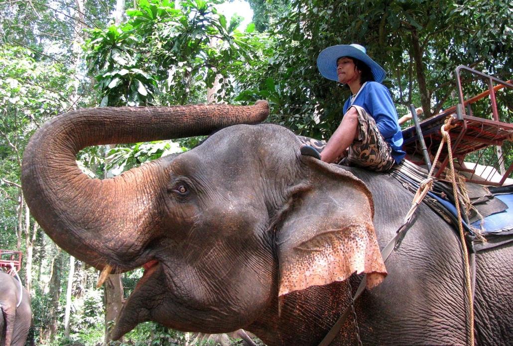 Mahout reitet auf einem Elefanten