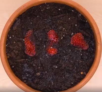Oder ihr könnt dünne Scheiben von der Erdbeere abschneiden und in einen Topf geben
