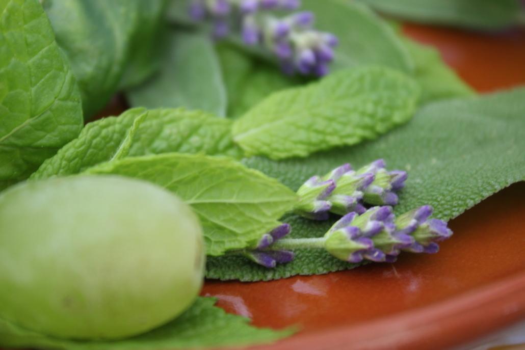 Minze, Basilikum, Lavendel und mehr - alles kann helfen, um mehr Wasser trinken zu wollen